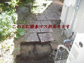 f0031037_2035417.jpg