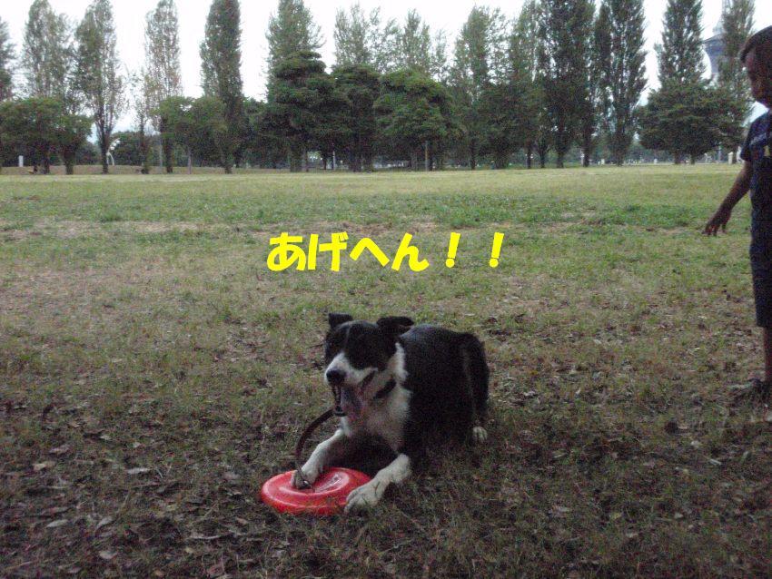 d0077740_137369.jpg
