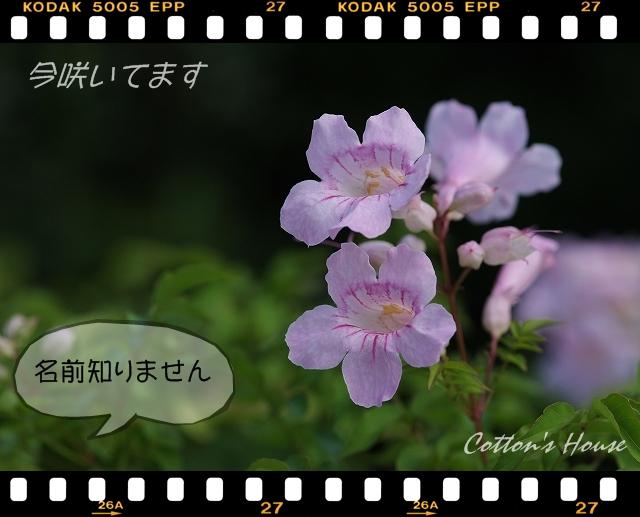 b0187161_1371731.jpg