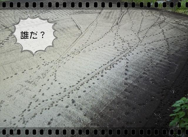 b0187161_139170.jpg