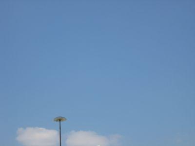 きのこ鳥。_e0003273_1451590.jpg