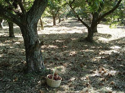 秋の収穫_c0140982_1633974.jpg
