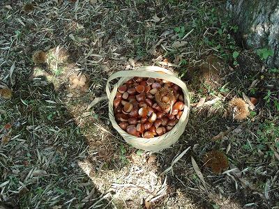 秋の収穫_c0140982_1636676.jpg
