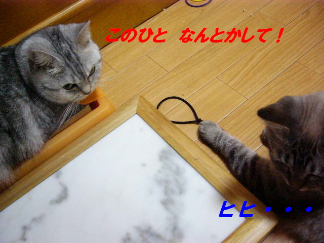 e0185485_19514583.jpg