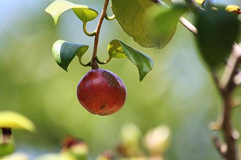 木の実色々と、ケイトウ、ヒガンバナ_f0030085_2130690.jpg