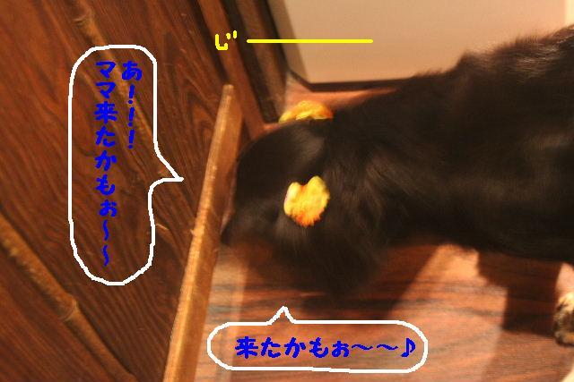 b0130018_16382573.jpg