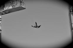 タカが飛んだ日..._b0065730_8482865.jpg