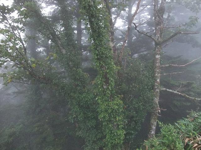四国迷走ツーリング 石鎚山の朝_f0050534_7594118.jpg