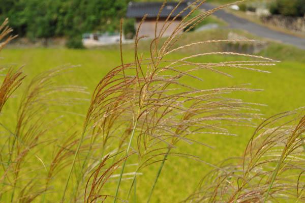 秋の実りはミノル君_f0132963_2054054.jpg