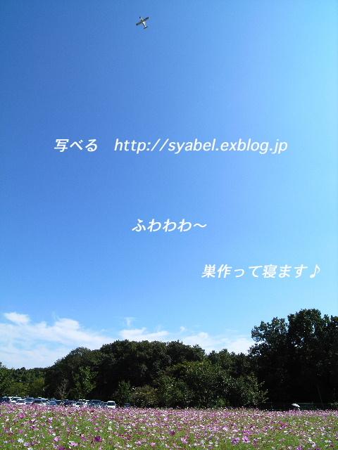 c0153764_17413851.jpg