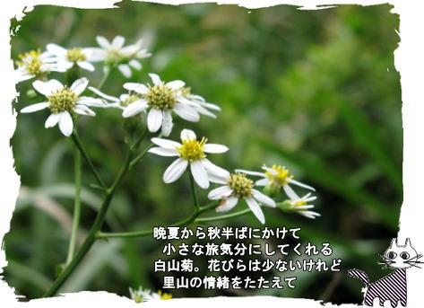 f0137096_17114956.jpg