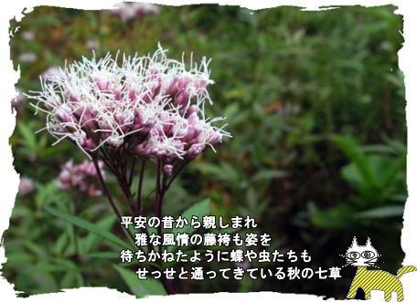 f0137096_17122682.jpg