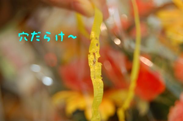 c0181639_1695242.jpg