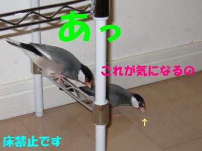 b0158061_21235021.jpg