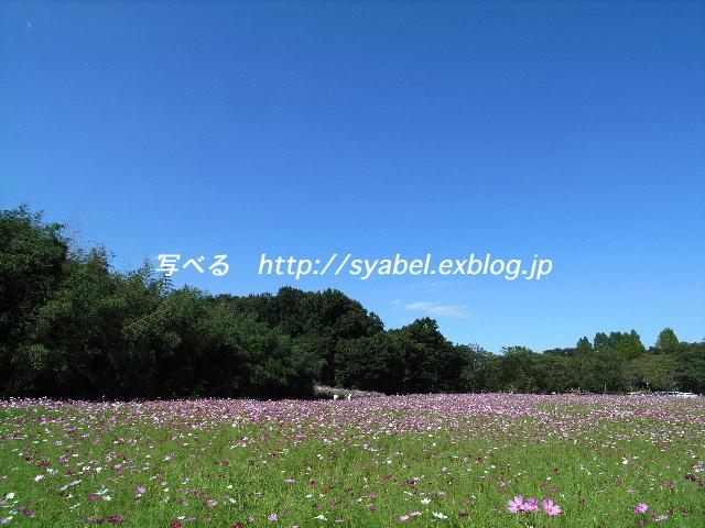 c0153764_5485641.jpg