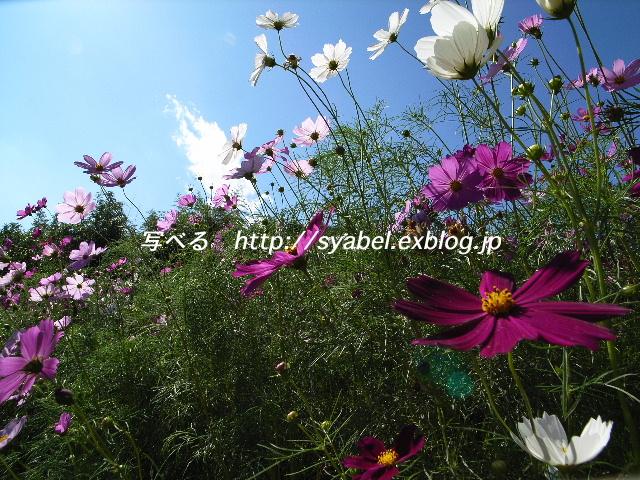 c0153764_5492746.jpg