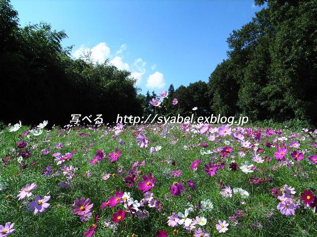 c0153764_5515991.jpg