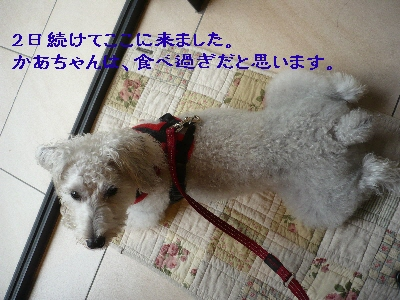 f0203369_20121376.jpg