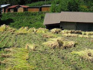 大収穫。_b0131012_2012357.jpg