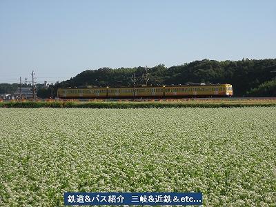 VOL,1186 『三岐鉄道 彼岸花と蕎麦畑』_e0040714_20344699.jpg