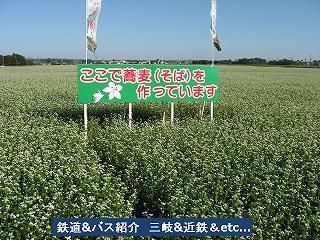 VOL,1186 『三岐鉄道 彼岸花と蕎麦畑』_e0040714_20361520.jpg