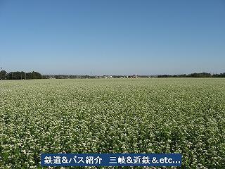 VOL,1186 『三岐鉄道 彼岸花と蕎麦畑』_e0040714_20362847.jpg