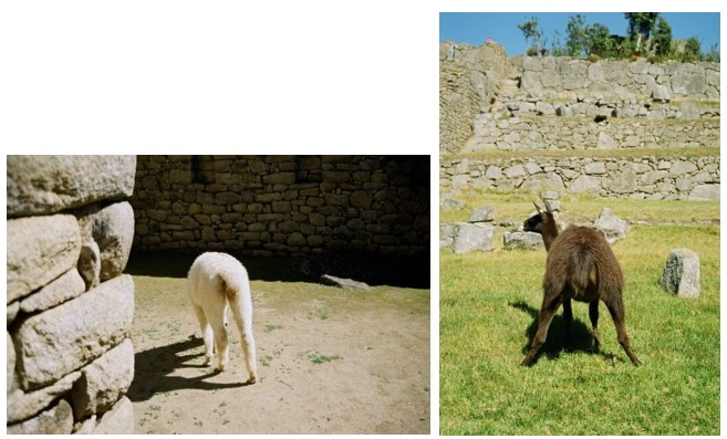 ペルー旅行記~その3  マチュピチュへ  <後編>_a0104621_13132918.jpg