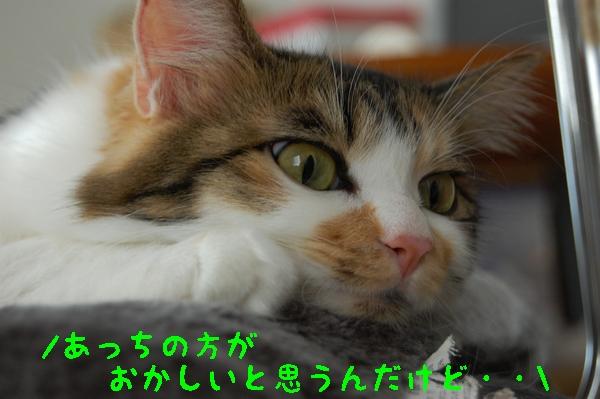 c0181639_171310.jpg