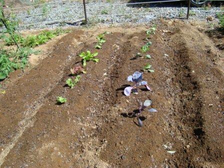 今の畑 9月3週目 2009_d0152765_2117167.jpg