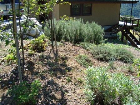 今の畑 9月3週目 2009_d0152765_21181165.jpg