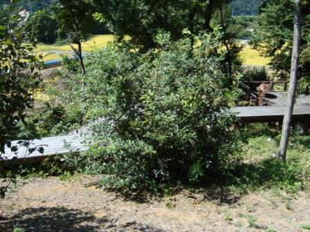 今の畑 9月3週目 2009_d0152765_21193429.jpg