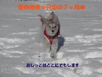 f0203369_2261159.jpg