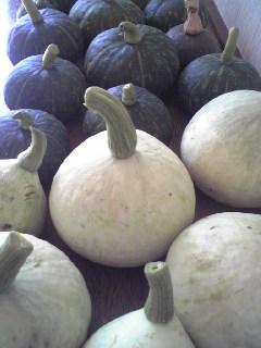 はくさいとかぼちゃ_a0138985_0103287.jpg