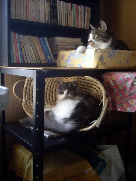 3ニャンコ & Meeのこの頃_a0136293_1315752.jpg