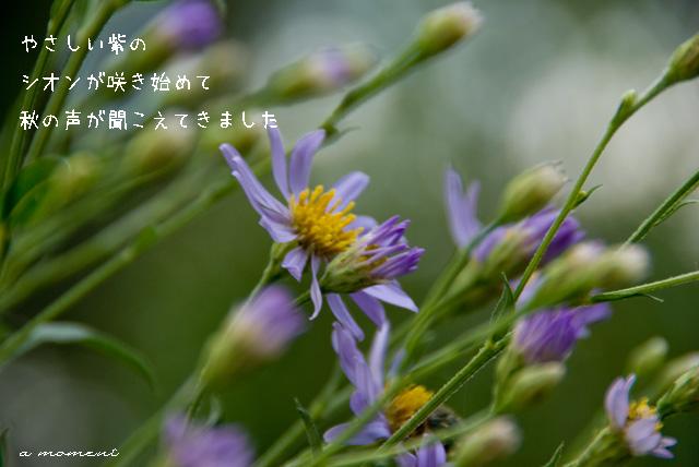 f0147895_135059.jpg