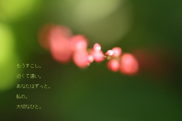 c0202541_21534141.jpg