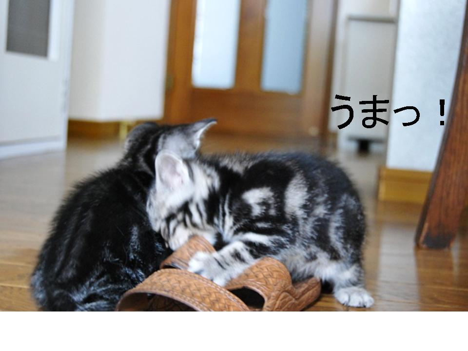 f0043859_20124641.jpg