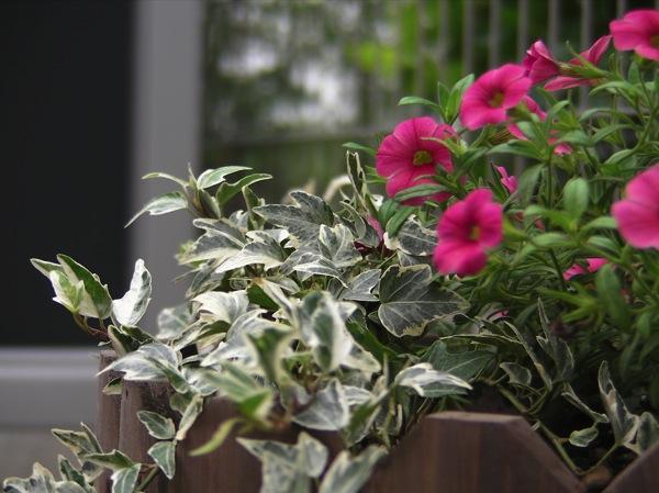 花壇をつくってみる_f0198764_2241427.jpg