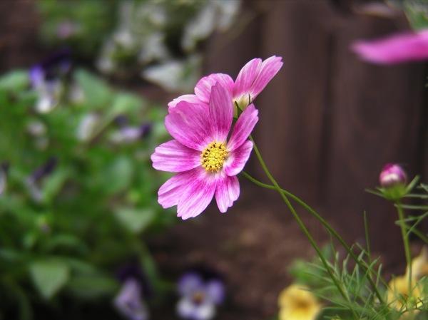 花壇をつくってみる_f0198764_22415329.jpg