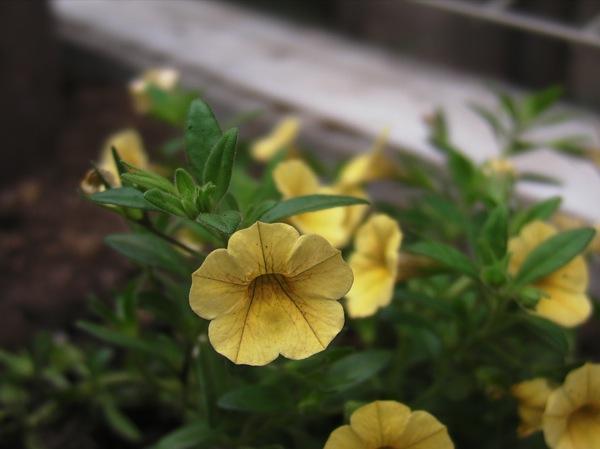 花壇をつくってみる_f0198764_22422828.jpg