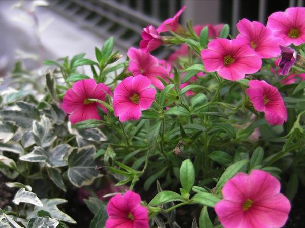 花壇をつくってみる_f0198764_2242568.jpg