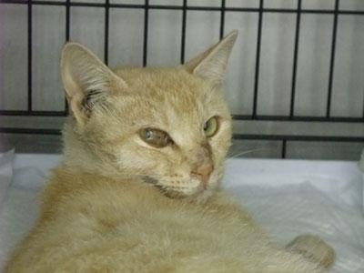 猫さんへ、セルフアイデンティティ・ホ・オポノポノのお願い_a0064067_021547.jpg