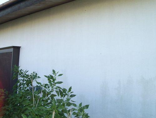 グリーンカーテン撤収_f0018078_1525489.jpg
