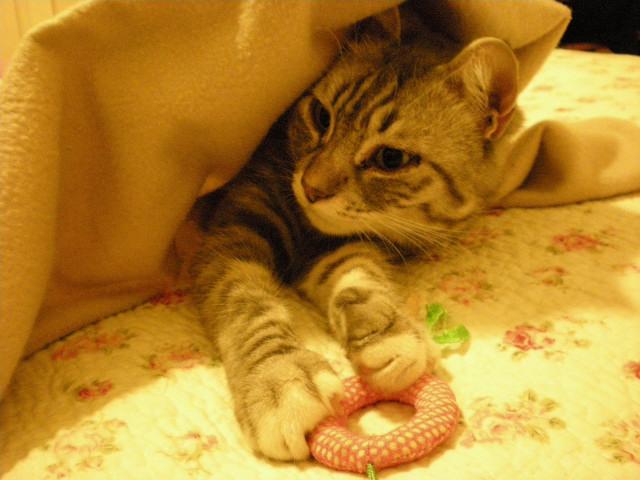 猫!!初秋を感じてます。_c0179785_621454.jpg