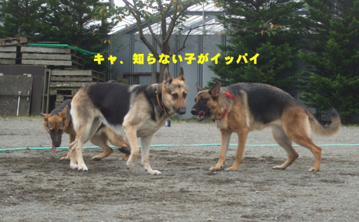 e0060693_2163995.jpg