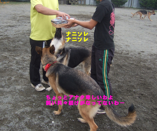e0060693_2191210.jpg