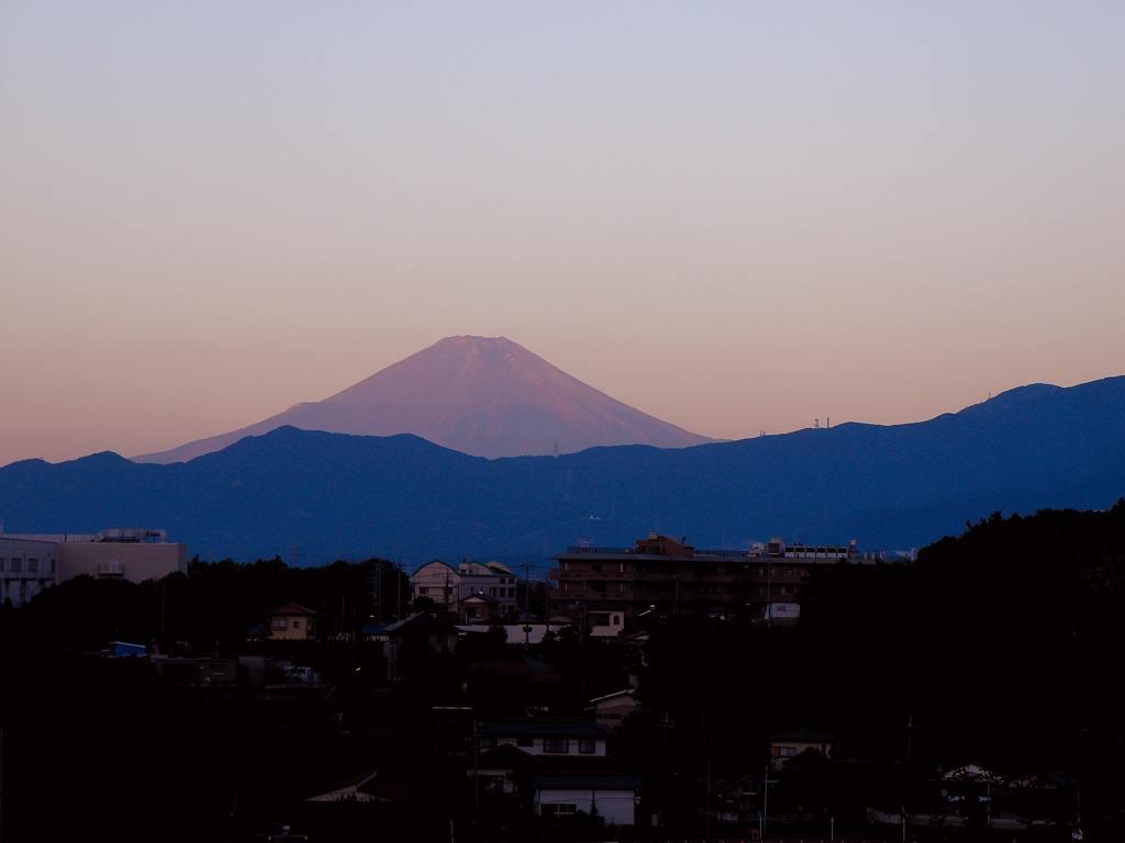コガモが来ました/赤富士_b0024798_532238.jpg