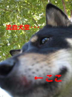 c0185516_10505288.jpg