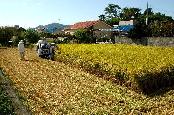 収穫の秋_b0093754_032594.jpg