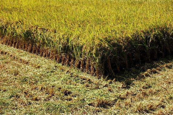 収穫の秋_b0093754_033393.jpg